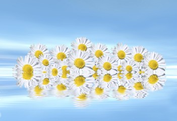 Daisies on water, mirroring, 3D graphics