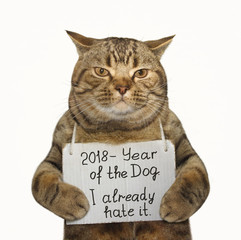 The cat is holding a funny banner . White background.