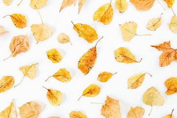 Autumn pattern of autumn leaves on white background. Flat lay, top view