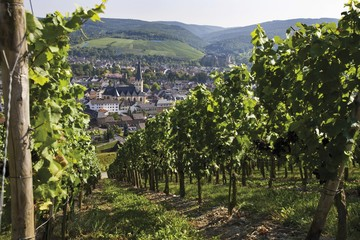 View from the vineyard on Ahrweiler and the Laurentiuskirche church of Ahrweiler, Bad Neuenahr-Ahrweiler, Rhineland-Palatinate, Germany, Europe