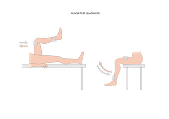 muscle test of the quadriceps femoris, or quads, used in kinesiology and neurology examination