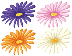 Four colors of flowers on white background