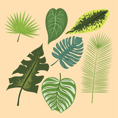 Tropical leaves summer green exotic jungle palm leaf nature plant botanical hawaii flora vector illustration.
