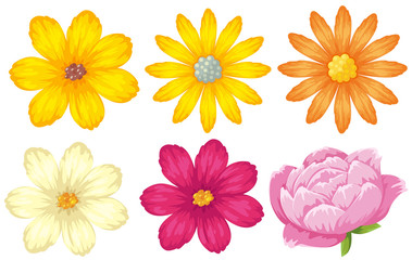 Different kinds of flowers in yellow and pink