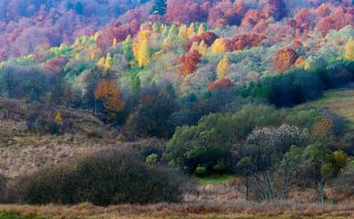W kolorach jesieni.