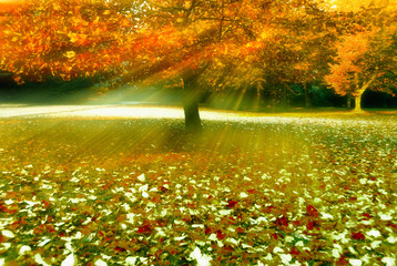 Wall Mural - Autumn tree with ground full of leaves and rays of sun