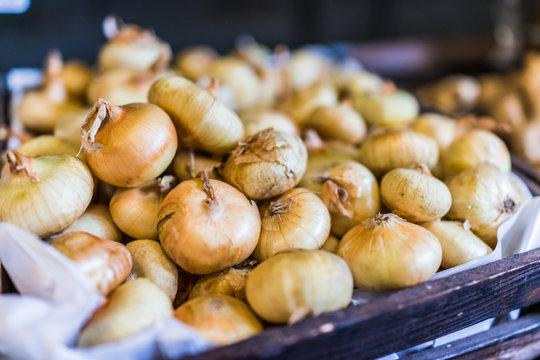 Macro closeup of small, sweet Cipollini Onions