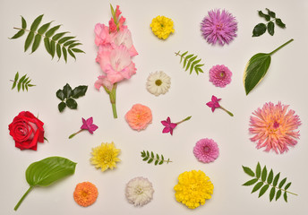 Flowers of roses, dahlias, gladiolus, tobacco, marigolds and leaves host, astilbe and Ricinus communis isolated on white background. Flora composition and collection. Nature and plants. Red, pink