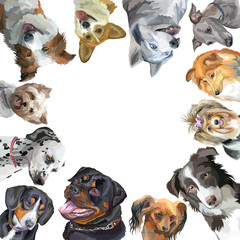Group of dogs different breeds in square isolated on white background