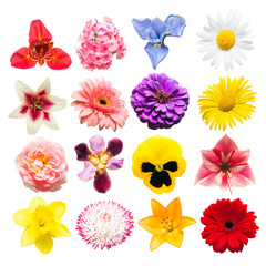 Flowers collection of assorted roses, daisies, irises, pansies, tigridia, amaryllis, lilies, gerbera, tulips isolated on white background. Flat lay, top view