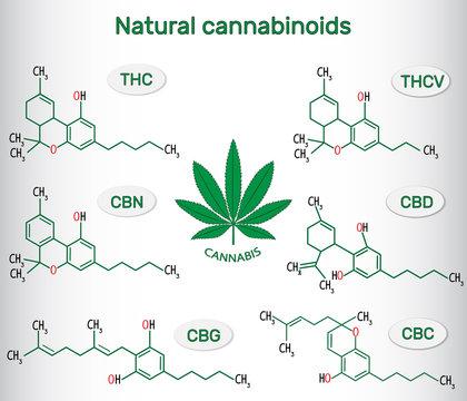 Chemical formulas of natural cannabinoids in cannabis : tetrahydrocannabinol (THC), tetrahydrocannabivarin (THCV) , cannabidiol (CBD), cannabinol (CBN), cannabigerol (CBG), cannabichromene (CBC).