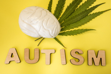 Marijuana or cannabis and treatment of autism concept photo. Figure of human brain lies on green leaves of cannabis plant near three-dimensional letters composing the word Autism on yellow background