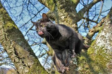 Cat licking katze lecken baum klettern tree climbing