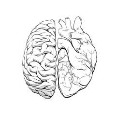 Versus human brain right and left hemisphere and heart illustration. Creative concept vector design.