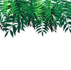 Background with tropical trees. Leaves palm tree illustration. Modern graphics.