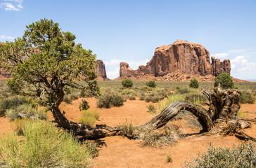 Monument Valley, old trees - Arizona, AZ, USA