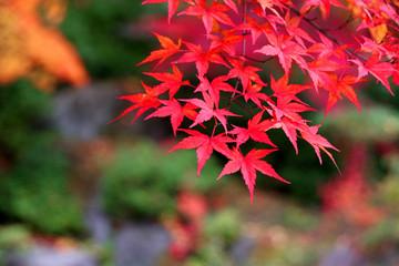 秋の翠楽苑(福島県・白河市)