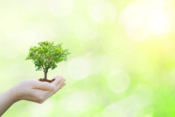 Ecology concept human hands holding big plant tree with on blurred sunset background world environment