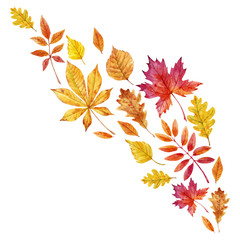 Watercolor fall leaves vector set