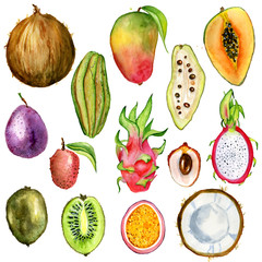 tropical fruit slice watercolor hand drawn illustration