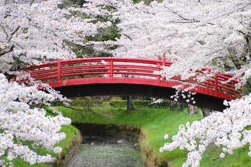 翠ヶ丘公園の桜(福島県・須賀川市)