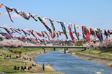 釈迦堂川の桜(福島県・須賀川市)