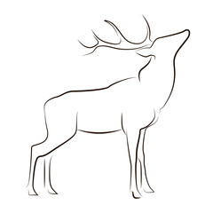 Standing black line deer on white background. Hand drawing vector graphic animal.