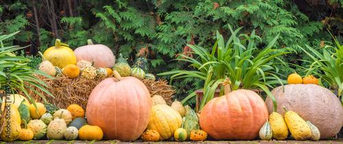 Kurbisse Als Deko Fur Herbst Und Halloween Stock Photo And Royalty