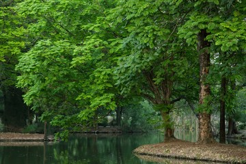 Landscape with river, tree and green in spring.