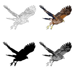 Vector illustration, an image of a flying hawk. Black line, black and white and gray spots, black silhouette, color image