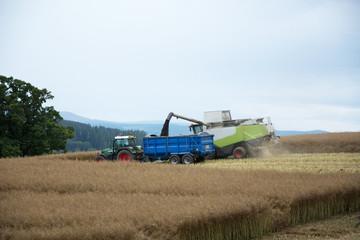 Taking in the Harvest