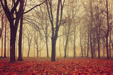 Autumn park in dense fog. Autumn foggy landscape with bare autumn trees