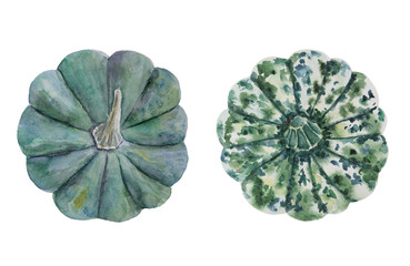 Green and spotted pumpkin top view painted with watercolor on white background