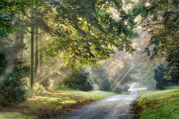 Autumn sunlight rays through trees along a quiet rural road in the early morning mist. Landscape in Norfolk England with grass verges