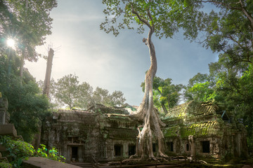 Acrylic Prints Temple Ta prohm temple
