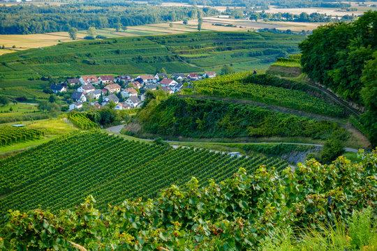 Vineyards at Ihringen, Germany