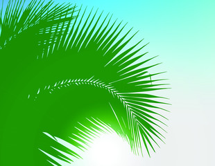 Vector Illustration of coconut leaves texture.