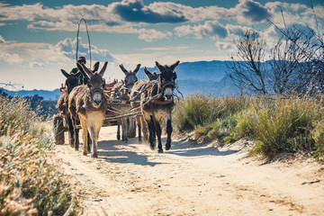 Donkeys pulling a cart filled with tourists' luggage trot down a dirt road in the Cederberg Wilderness Area, South Africa Wall mural
