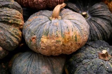 Heap of dark green and yellow two-tone color pumpkins, for texture and background
