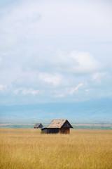 Little wooden barns in a wheat field