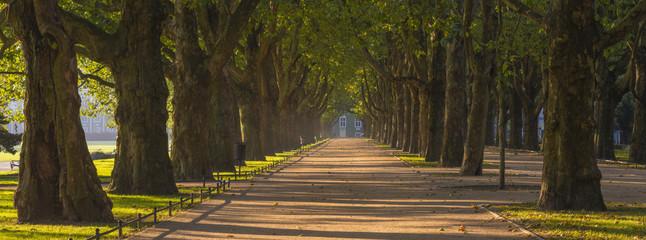 autumn park - fototapety na wymiar