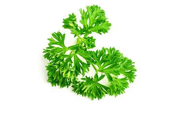 parsley branch