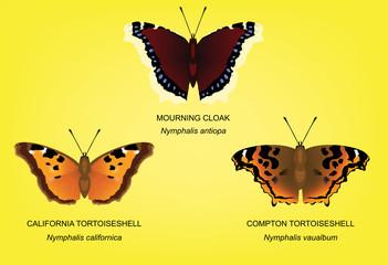 Butterfly Tortoiseshell Set Vector Illustration