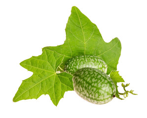 Melothria scabra, cucamelons or mouse melon. Isolated on a white background