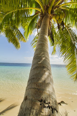 green coconut palm tree leaves above crystal blue sea