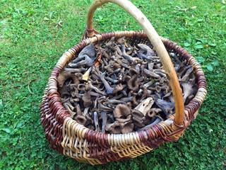 panier a champignons