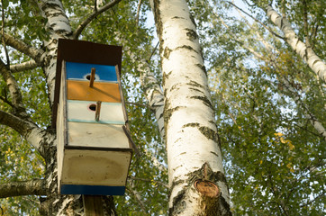 Beautiful colorful houses for birds on birches.
