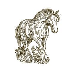 Frisian horse. Sketch. Vector illustration.