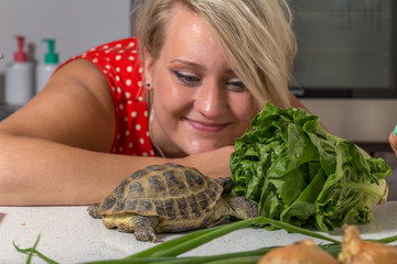 Tortoise eating roman salad while young woman looks at him