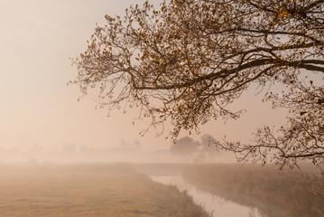 Goldener Herbst im Nebel